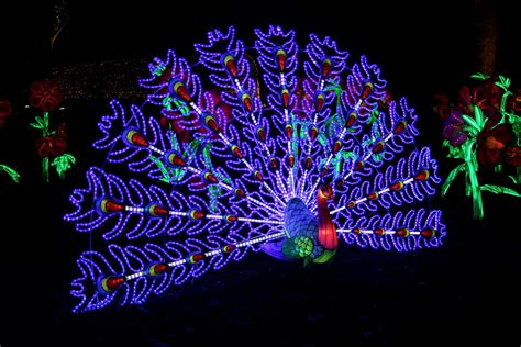 christmas at kew 2016 london