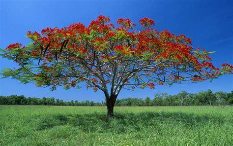 Beautiful And Simple Nature Wallpaper