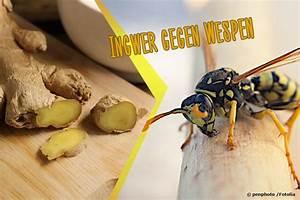 Kupfer Gegen Wespen : hilft ingwer gegen wespen vertreibt der geruch die ~ Watch28wear.com Haus und Dekorationen