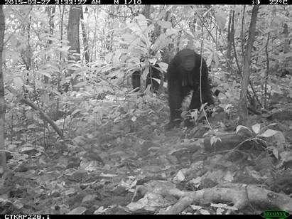 Chimpanzee Newshour Wildlife Pbs Animal Gifs Comment