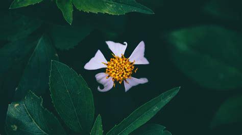 Littlebug 365 ภาพน่ารัก วอลเปเปอร์มือถือ: เซ็ทภาพดอกไม้ วอ ...