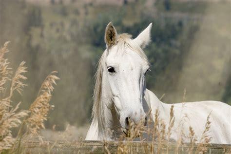 horse horses wallpapers shutterstock 1067 1600