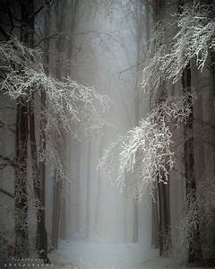 137 best images about Forests on Pinterest   Trees ...
