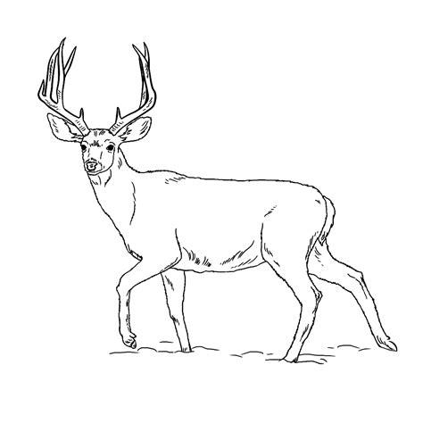 Hert Kleurplaat by Leuk Voor Een Hert Kijkt Schichtig Op