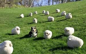 Caption needed - a dog amongst sheep - Primrose Blog