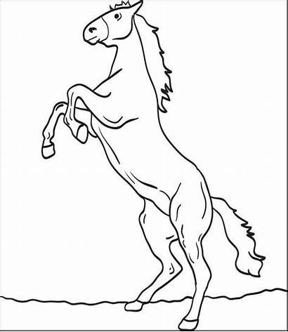 Horse Coloring Pages Horses Drawing Printable Easy