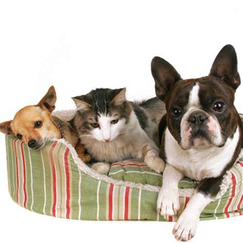 Crawford Dog And Cat Hospital  Garden City Park, Ny Home