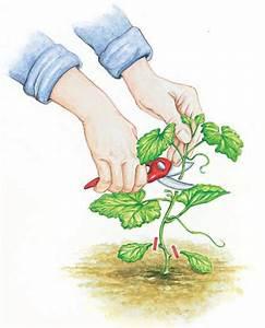 Melone Selber Ziehen : die besten 25 bew sserungssystem selber bauen ideen auf pinterest obstgarten diy hochbeet ~ Frokenaadalensverden.com Haus und Dekorationen