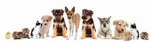 Mehrere Bilder In Einem : unsere leistungen tierarztpraxis dres reinartz in j lich ~ Watch28wear.com Haus und Dekorationen