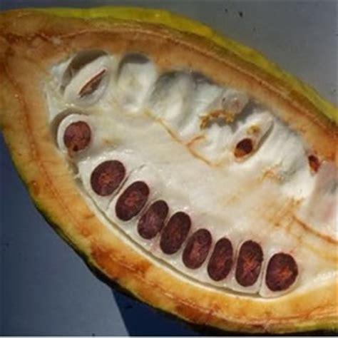 les vertus cosmetiques du beurre de cacao recetteje