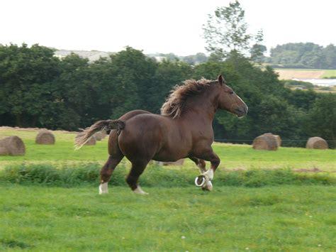 breton draft energie cheval