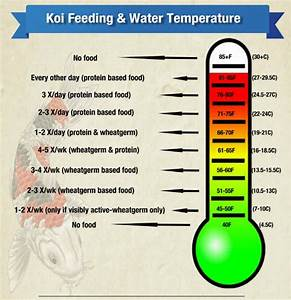 Feeding Your Koi As Water Temperatures Change