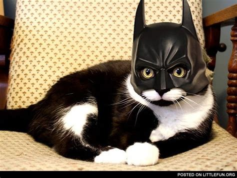 bat cat costume littlefun batman cat