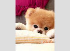 Die süßesten HundeAccounts bei Instagram