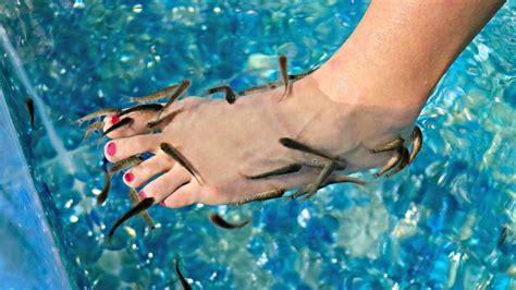 Poltrona Fish Pedicure :  Healthy Or Harmful?