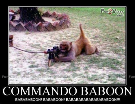 Baboon Meme - funny pictures of monkeys with captions impremedia net