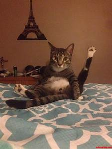 Funniest Cat Picture Ever | www.imgkid.com - The Image Kid ...