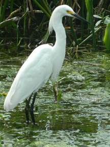 Common Florida Birds