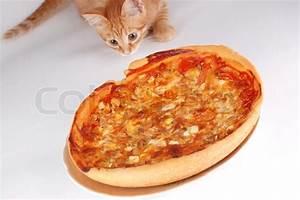Kochen Für Katzen : eine katze riecht pizza auf einem wei en hintergrund ~ Lizthompson.info Haus und Dekorationen