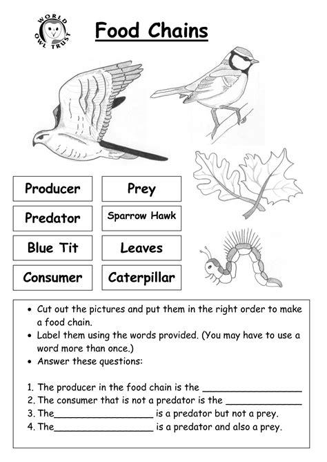 images   grade science food chain worksheet