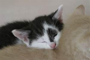 Was Brauchen Katzen : die 10 tods nden in puncto schlafen geliebte katze magazin ~ Lizthompson.info Haus und Dekorationen