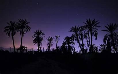 Palm Trees Night Tree Sky Wallpapers Moonlight