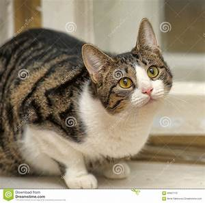 Weißer Wurm Katze : getigerte katze mit wei er katze stockbild bild von flaumig tatze 45607113 ~ Markanthonyermac.com Haus und Dekorationen