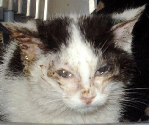 Feral Cats  Galway Cat Rescue