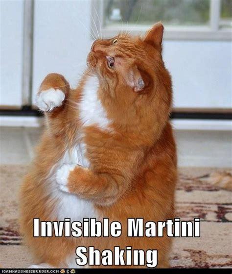 Lolcat Meme - invisible lolcats memes