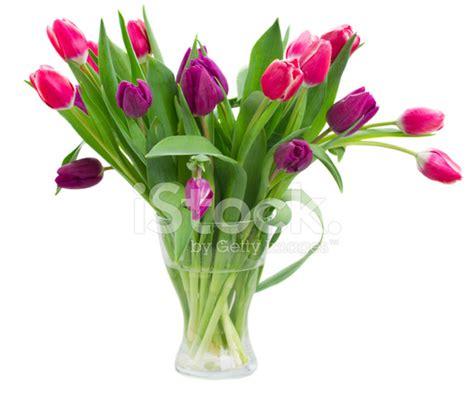 vase für tulpen rosa und violette tulpen blumenstrau 223 in der vase stockfotos freeimages