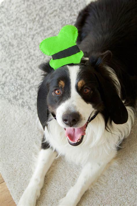 diy goofy hat  dogs disney family