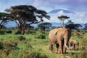 Africanelephant2 - Habitat