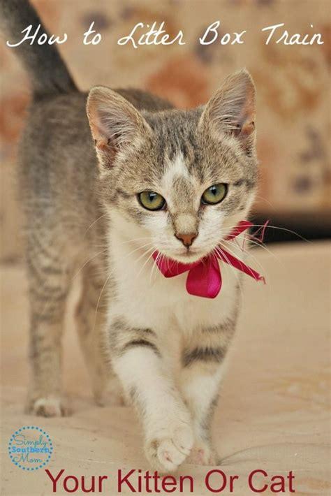 litter box training tips kitten cat