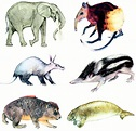biology - Could Whales Elsewhere be Afrotheres ...