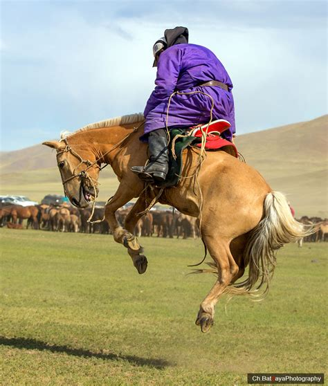 horse culture mongolia ancient mongols nomadic traditional captured unchanged showing breeding method