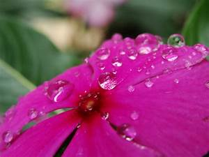 water drops on flower, photos, #1332217 - FreeImages.com
