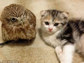 owl cat fuku the owl and marimo the cat who really did become best