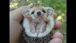 Cute baby animals pictures - YouTube  Cutest