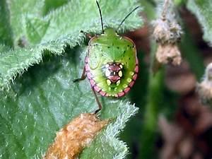Es Grünt So Grün : es gr nt so gr n der blattschneider kommt foto bild tiere wildlife insekten bilder auf ~ Eleganceandgraceweddings.com Haus und Dekorationen