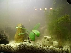 Einfahren Eines Aquariums Nach Ersteinrichtung Alle