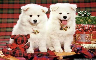 Christmas Dog Wallpapers Dogs Frankenstein Crazy Kb