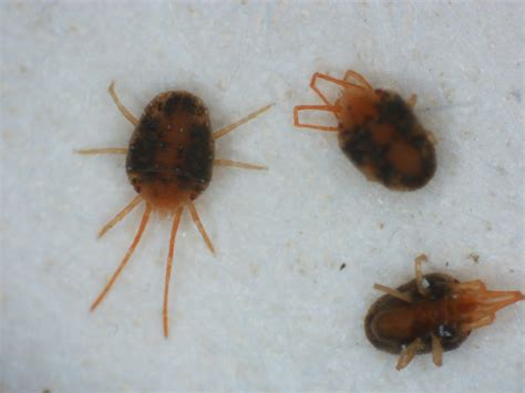 small brown bugs on window sill small brown bugs on window sill 28 images small gray bugs in kitchen quicua com the pool
