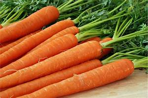 Carrots Allergies in Dogs - Symptoms, Causes, Diagnosis ...  Carrot
