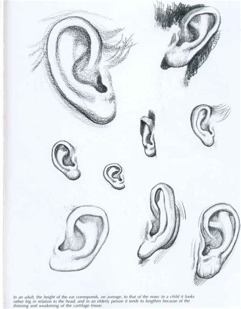 Best Ear Drawing Ideas And Images On Bing Find What You Ll Love