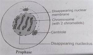 Icse Board 2018 Fully Solved Biology  Science Paper
