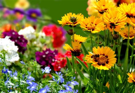 Farben Im Garten  Blumen Gekonnt Arrangieren Obi