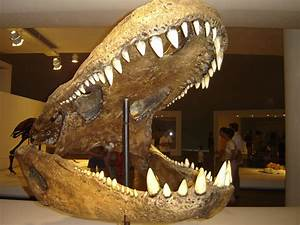 The gallery for --> Purussaurus Vs Megalodon