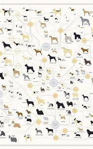 The gallery for --> Dog Breeds Poster
