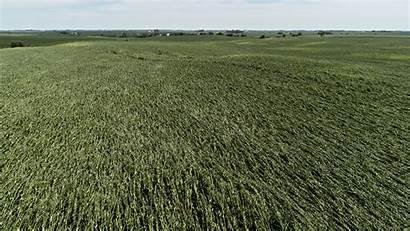 Iowa Damage Derecho Corn Aerial Midwest Devastating
