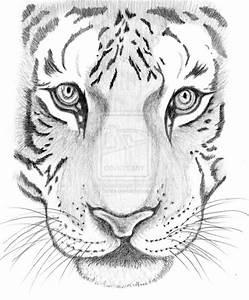 Tiger sketch by Schre on DeviantArt